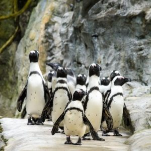 Google's Pinguin Parade